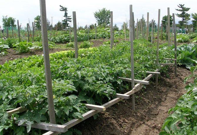 VELCRO® Brand Plant Ties Garden Tomatoes