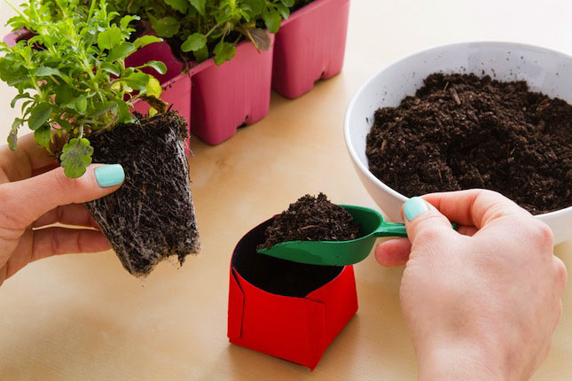 Fill PEEL-AWAY® Seed Pots Planter