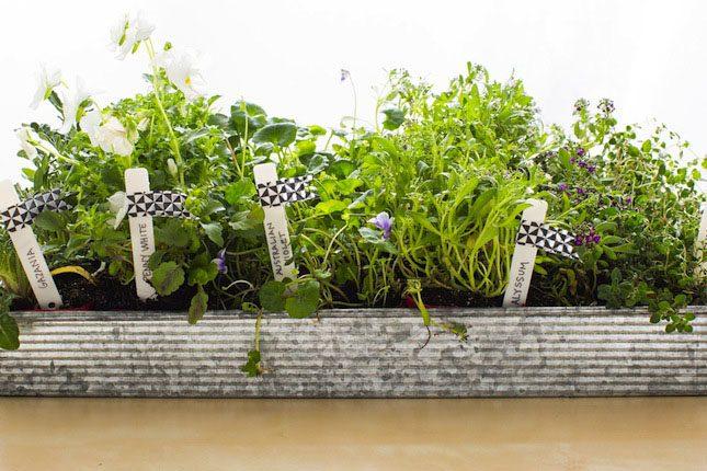 VELCRO® Brand Seed-Pot® Gardening DIY