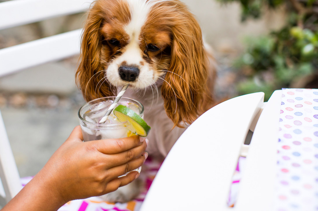 Summer_Drinks_Decorating_VELCRO®_Brand