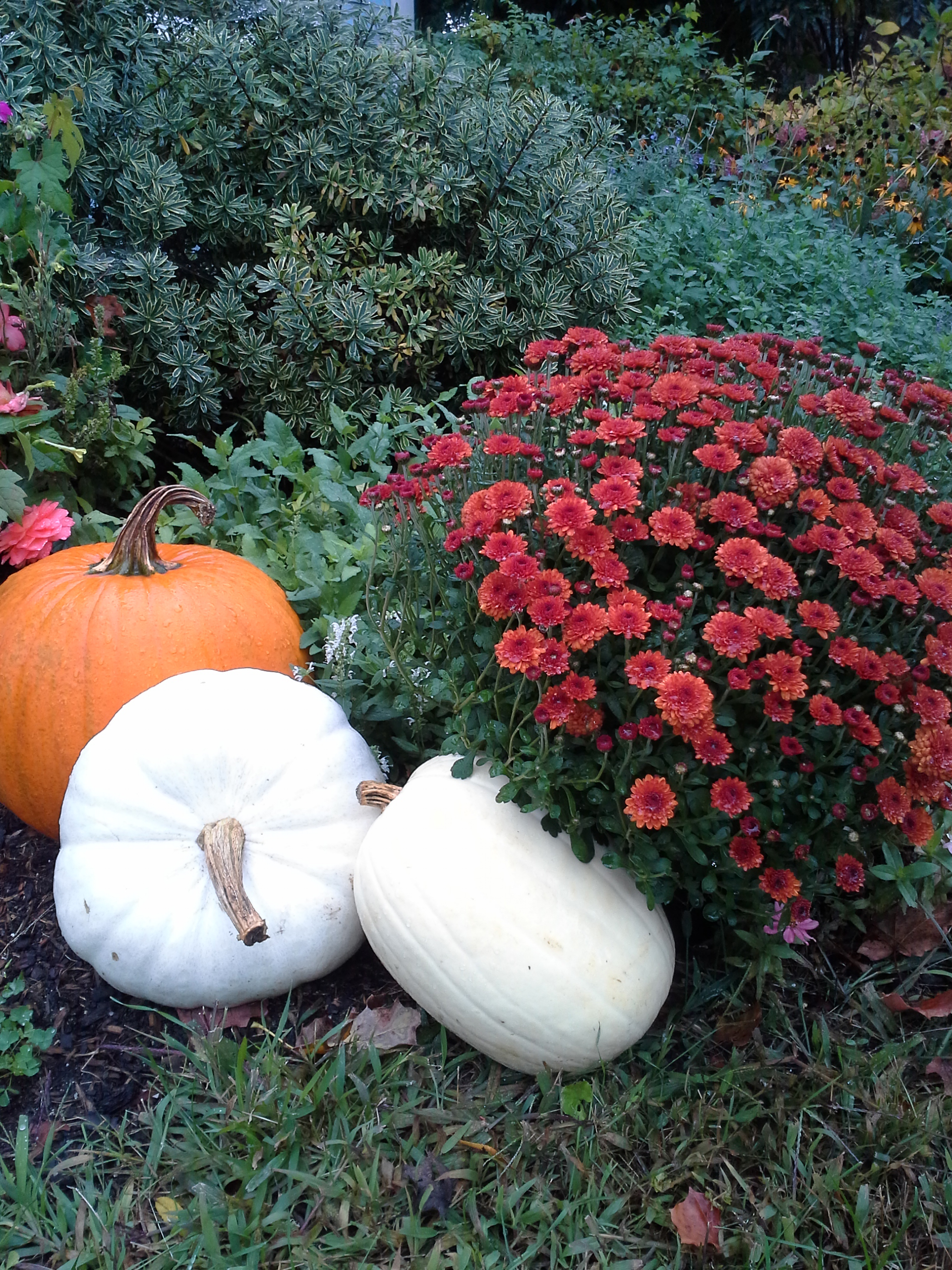 Nardozzi Halloween Blog Pumpkins