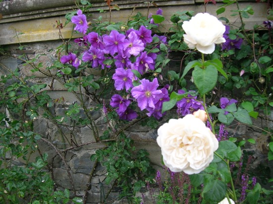 VELCRO® Brand Garden Blog