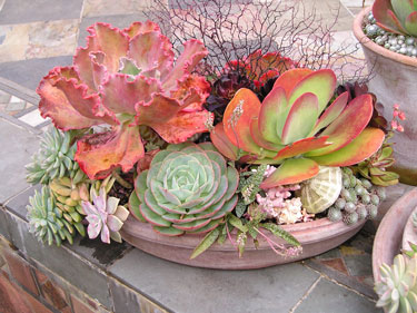 Charlie Nardozzi. Cool Container Plants. Water. Seeds