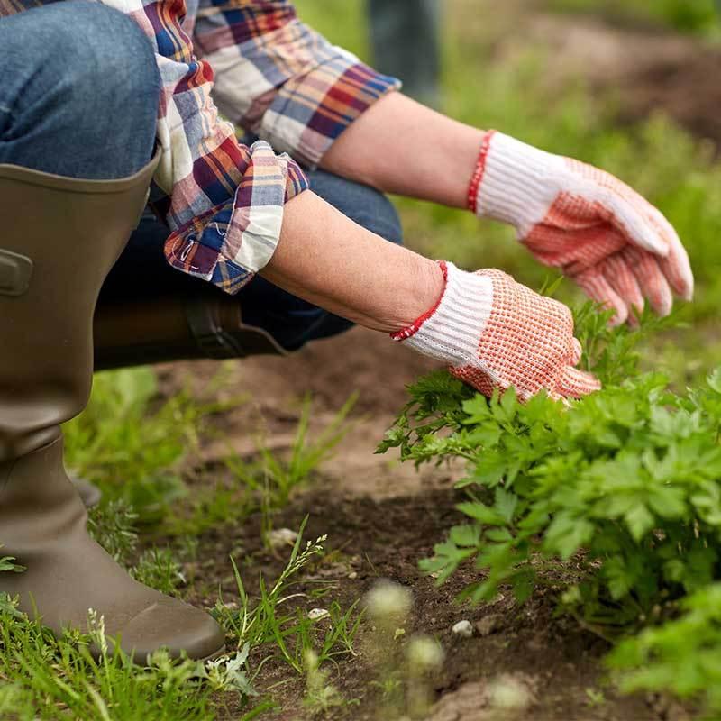Weeding-a-Garden