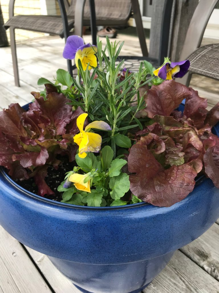 A Vegetable Succession Garden in a container
