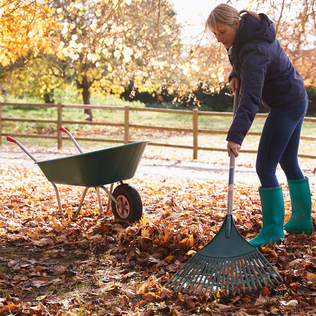 Raking leaves November Gardening jobs
