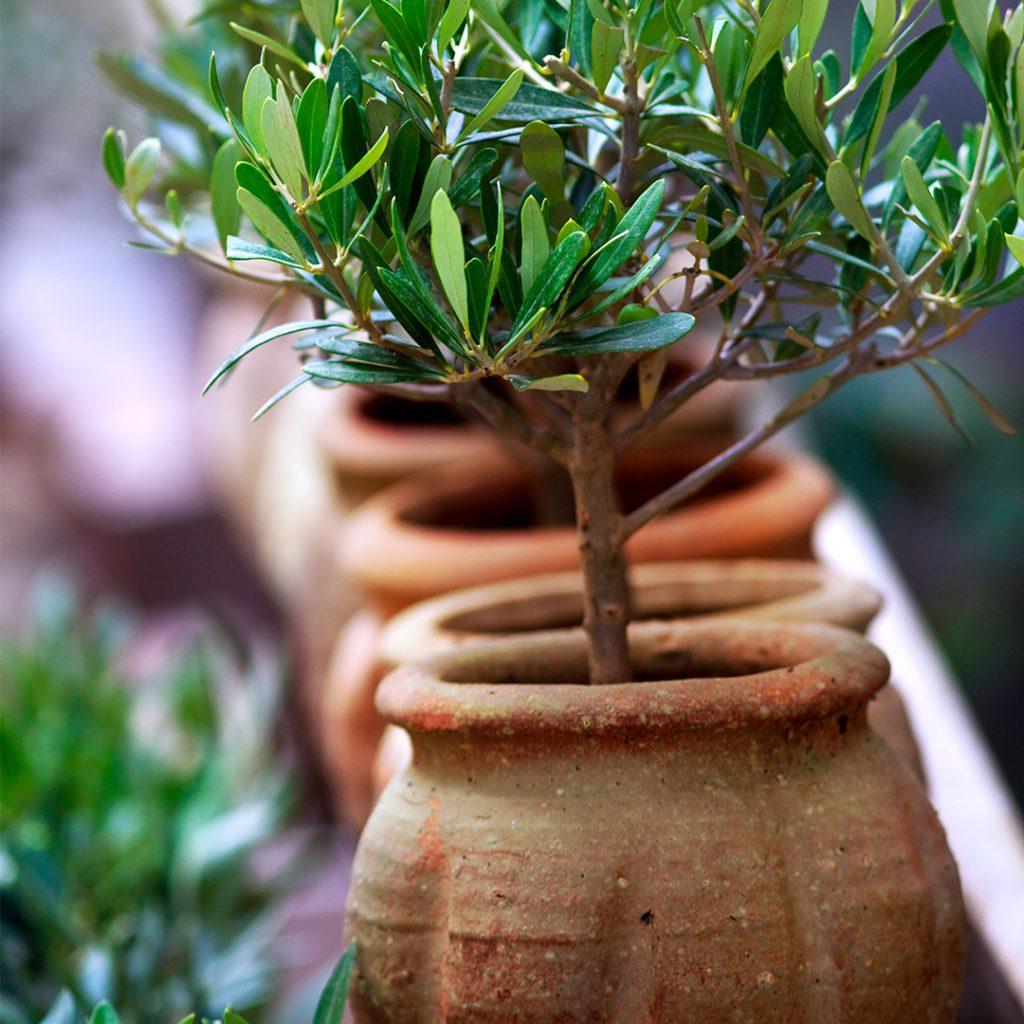 Plastic Swaps in the Garden - Terracotta Pots