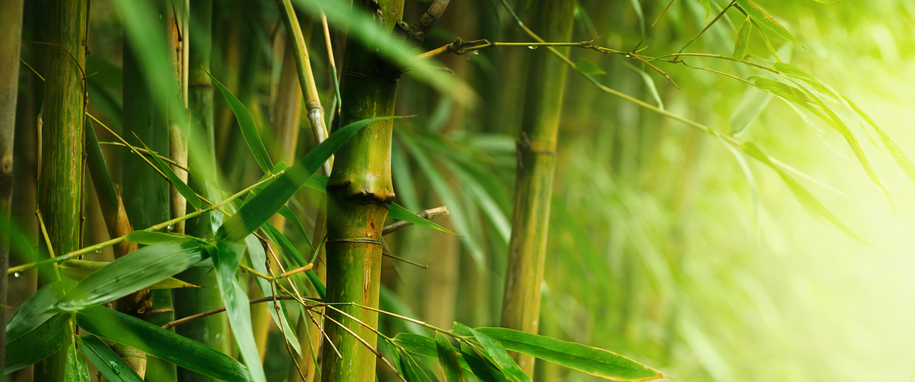 How to Grow Bamboo (Without It Taking Over Your Garden)