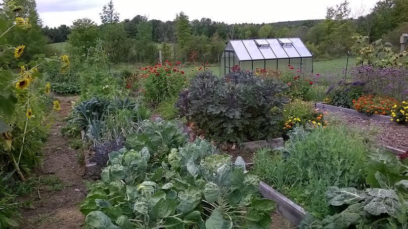 fall A Vegetable Succession Garden