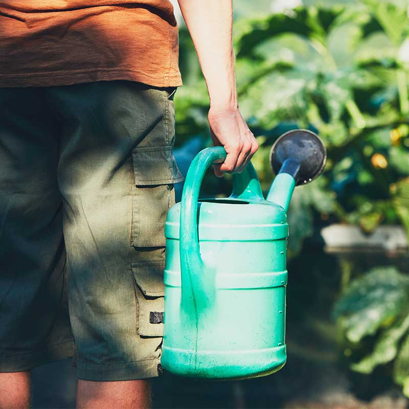 What To Do In The Garden In July: keep watering