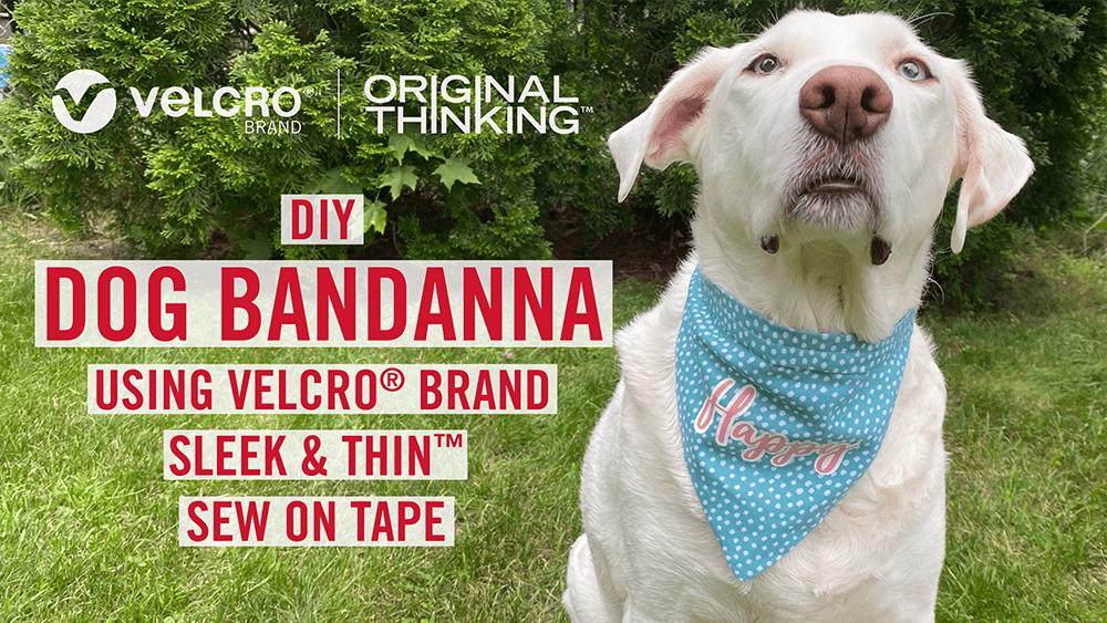 dog-bandana-COVER